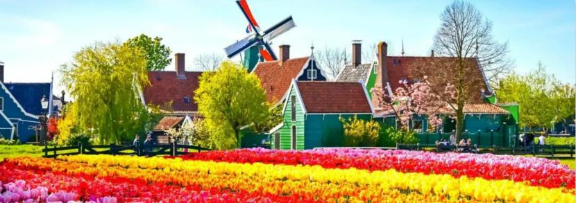 荷兰政府官宣:2020年起,荷兰,没了。