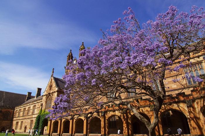 悉尼大学商科方向研究生要求