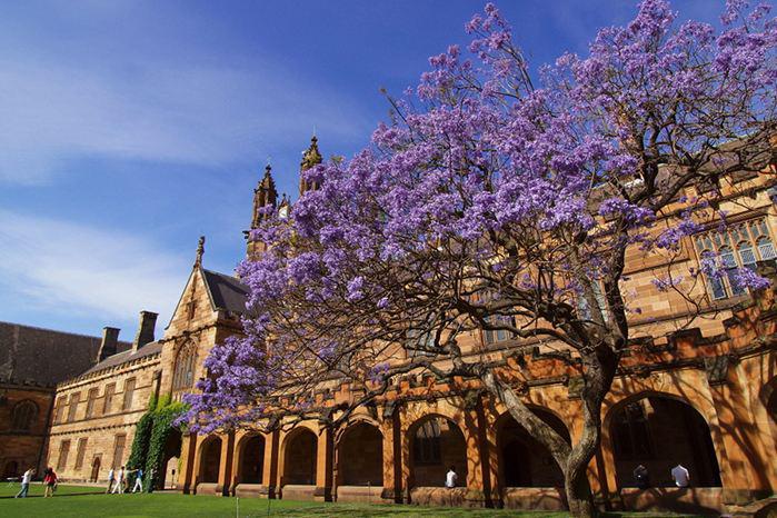 悉尼大学优势学科