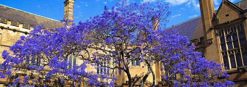 去悉尼大学读计算机专业?2019年课程学费盘点!
