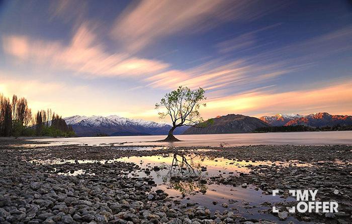 新西兰留学本科条件